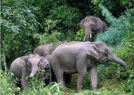 保护动物的踪影,幸运的您还有机会看到壮观的野象群