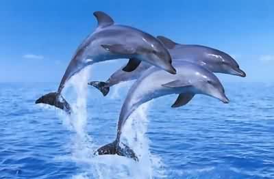 澳大利亚 新西兰 海豚岛12日升级版