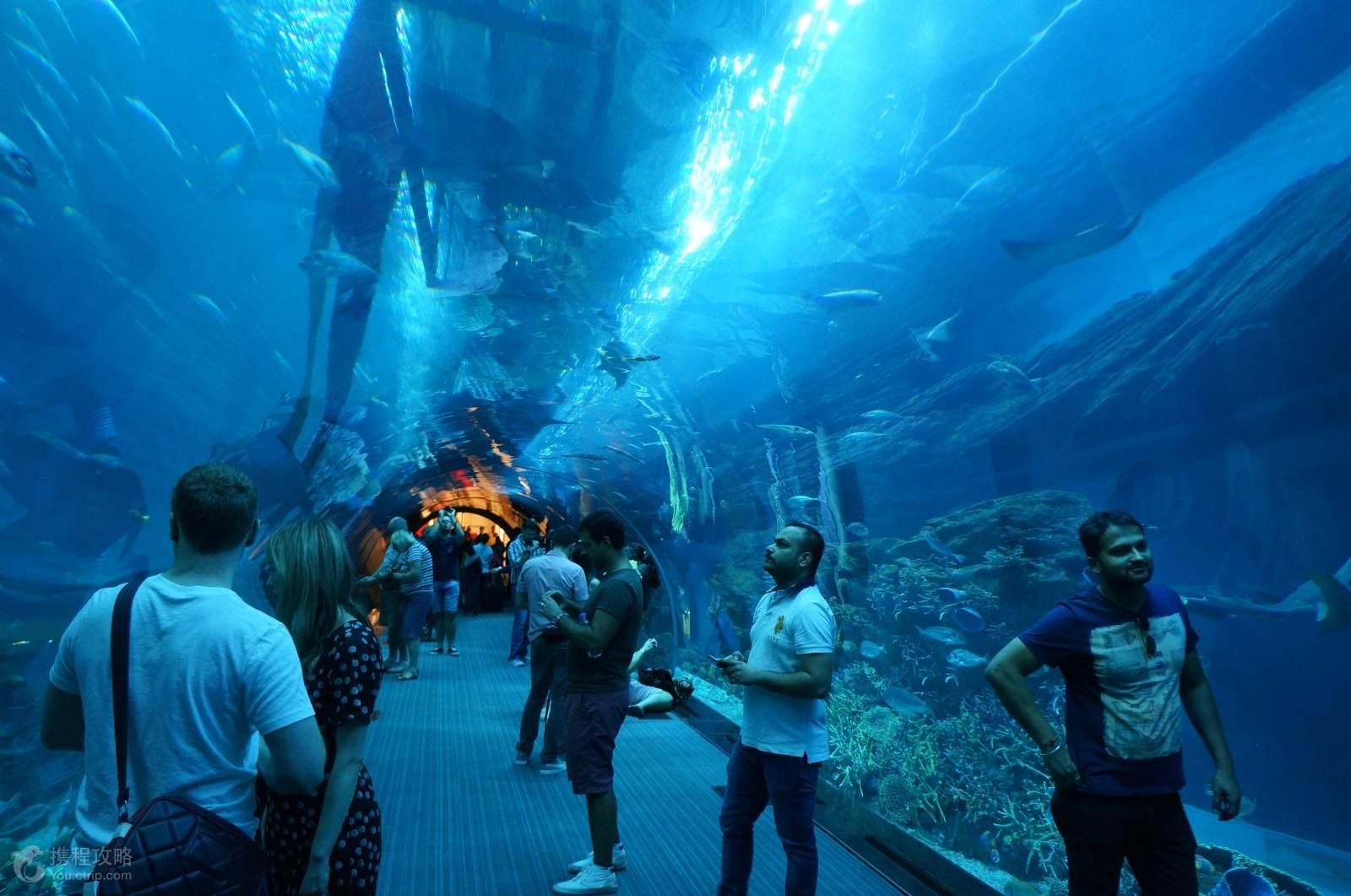 壁纸 海底 海底世界 海洋馆 水族馆 桌面 1600_1061