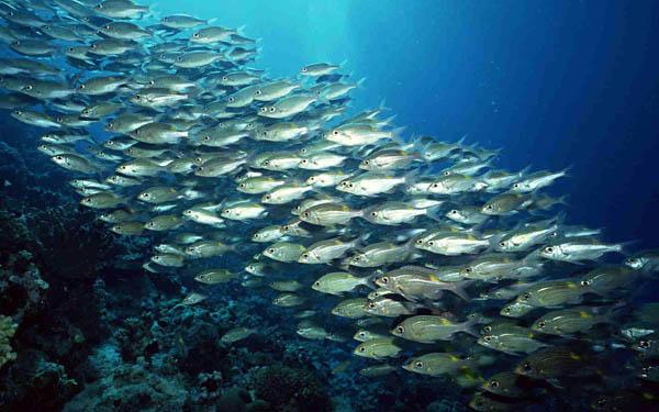厦门旅游海底世界有哪些看点