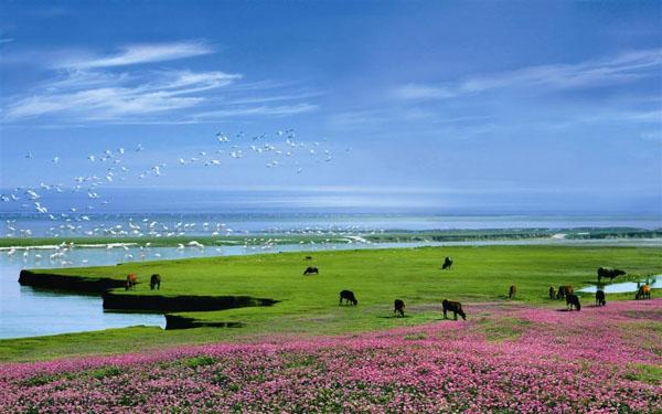 鄱阳湖国家湿地公园、观候鸟一日游