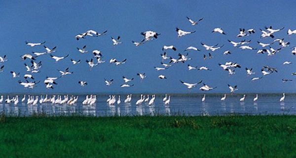 鄱阳湖国家湿地公园观侯鸟一日游