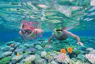 澳大利亚海豚岛八日度假之旅